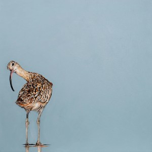 Quizzical Curlew - Natalie Toplass - Limited Edition