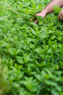 mint garden white on rice couple   @whiteonrice