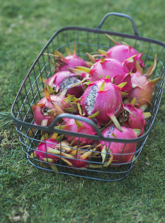 Dragon Fruit from the Garden by WhiteOnRiceCouple.com