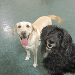 Happy dogs at camp
