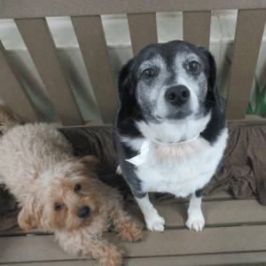 Dogs sitting on bench