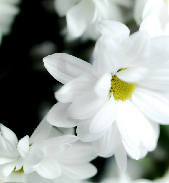 White Praline