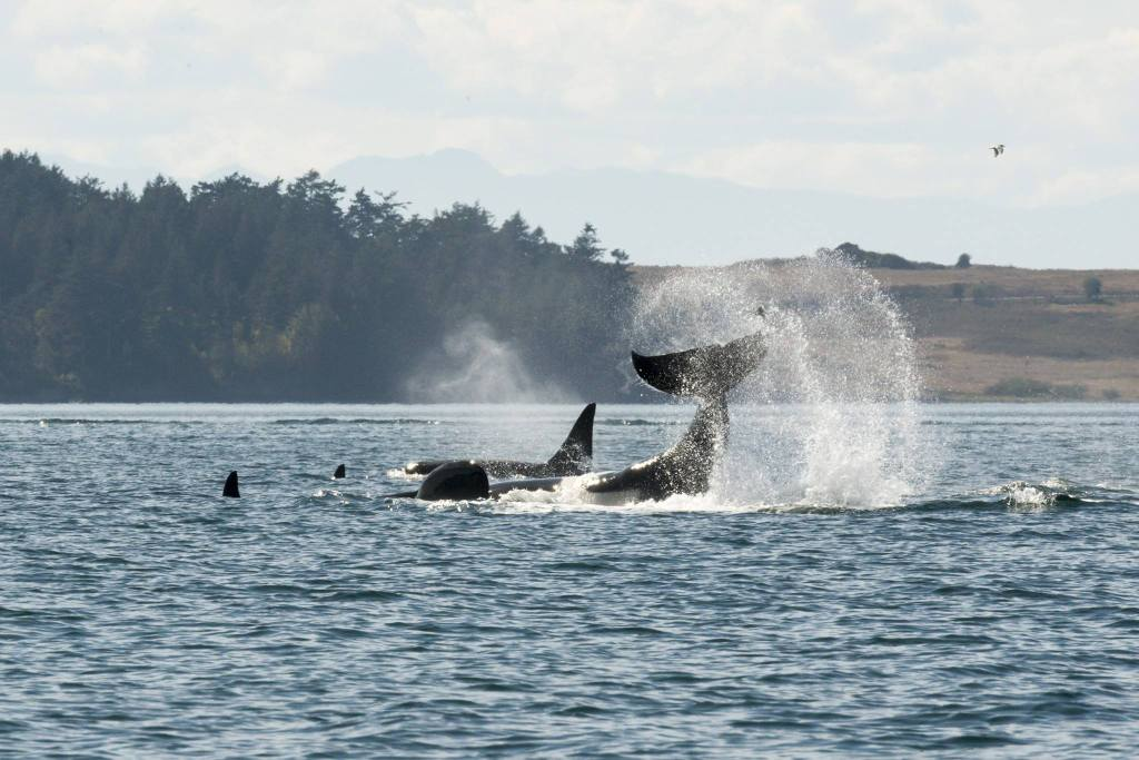 Whale Watching Adventure Giveaway