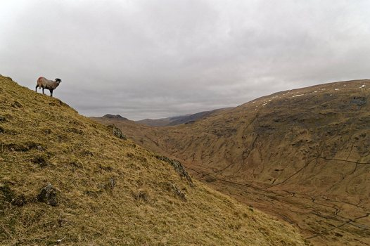 Scandale with Red Screes