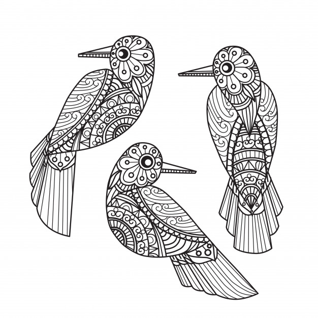 3 birds coloring pages for adults vector premium download