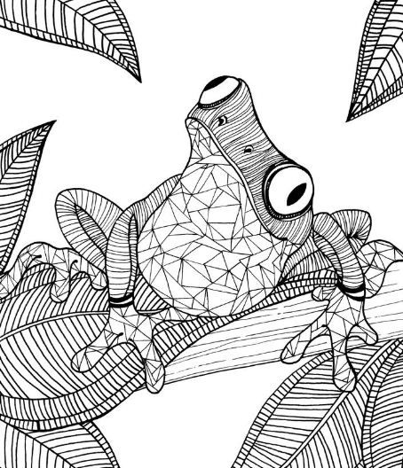 adult coloring pages frog animal patterns frog coloring