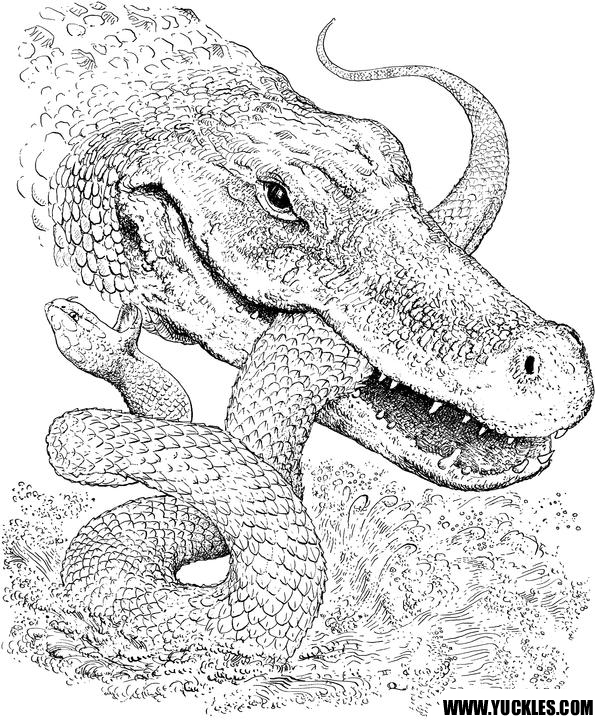 alligator coloring page yuckles