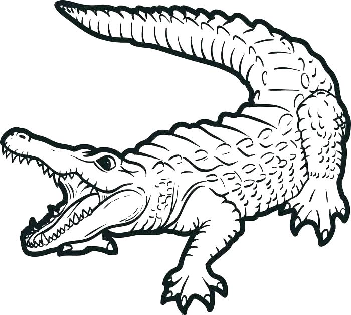 alligator coloring pages zeirclub