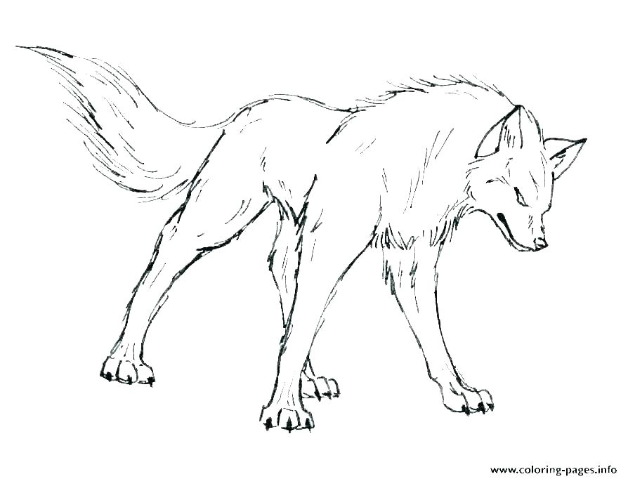 Anime Wolf Coloring Pages Gallery Whitesbelfast