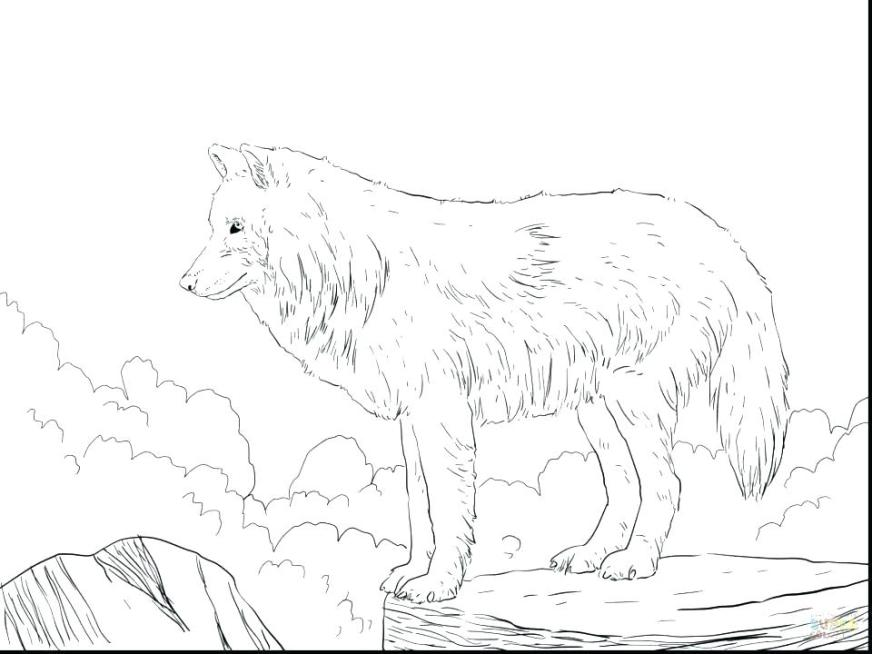 arctic wolf coloring pages wolf coloring sheet free
