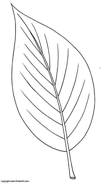 ash leaf coloring page kinderart