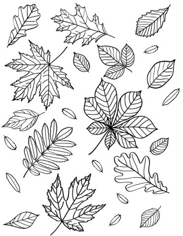 autumn leaves coloring page free printable coloring pages