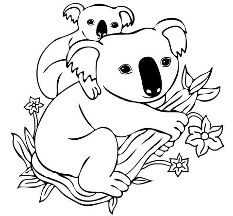 ba koala on mothers back coloring page free printable