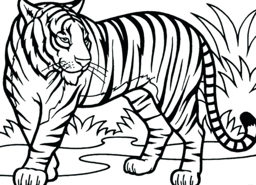 beauteous tiger coloring pages images preschool in page of