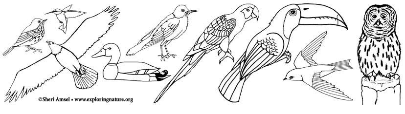 birds coloring picture