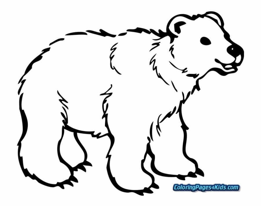 brown bear coloring pages for kids page bear clipart black