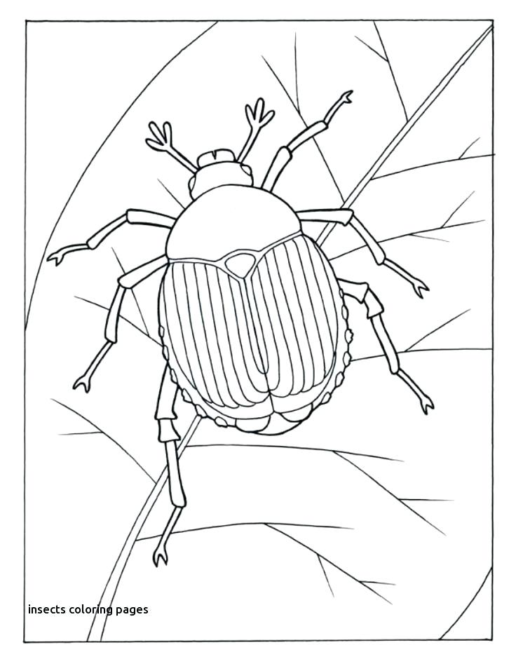 bug coloring sheets muabanvn
