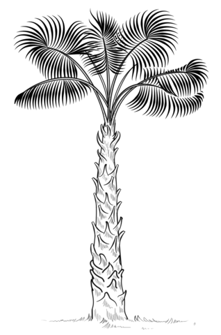 cabbage palm tree coloring page free printable coloring pages