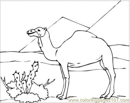 camel in desert coloring page coloring page free camel