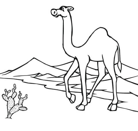 camel on the go through desert coloring page free