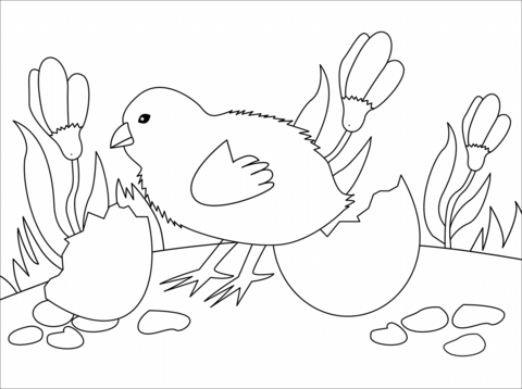 chick coloring page free printable coloring pages