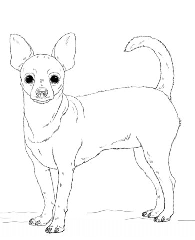 chihuahua dog coloring page free printable coloring pages
