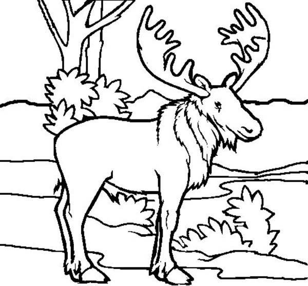 christmas moose colouring pages picolour