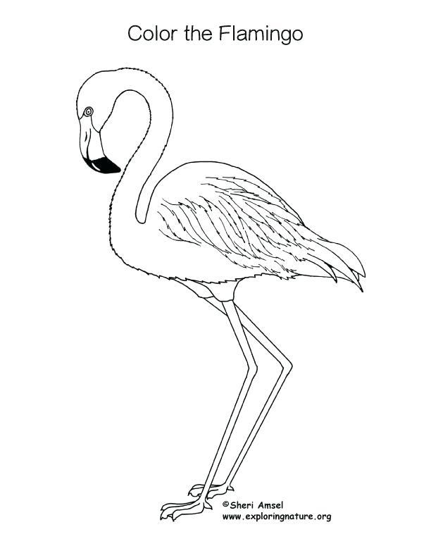 coloring book images of flamingos pusat hobi