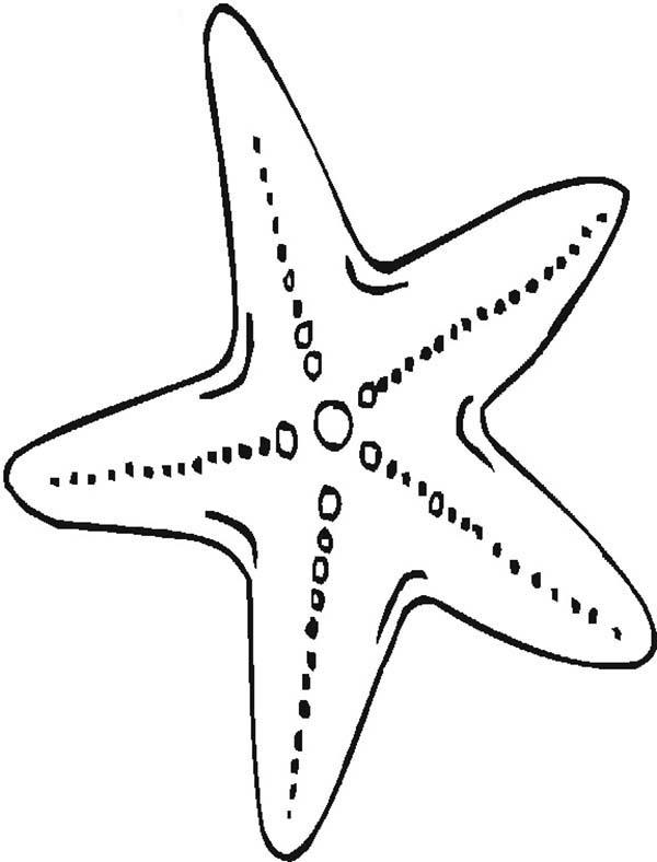 coloring book images of starfish pusat hobi