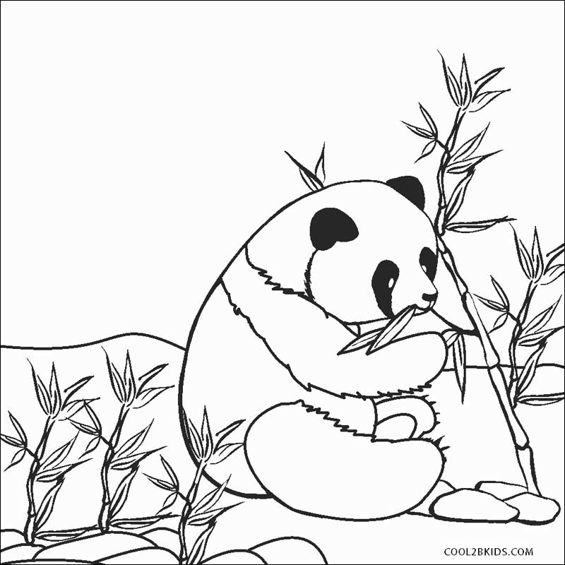 coloring page of pandas beautiful collection free printable