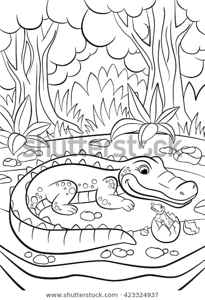 coloring pages animals mother alligator looks stock
