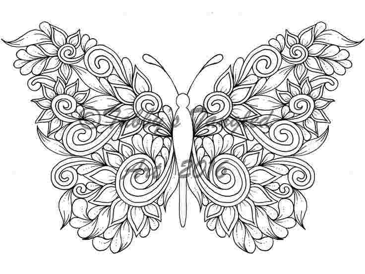 coloring pages for adults printable butterfly adult