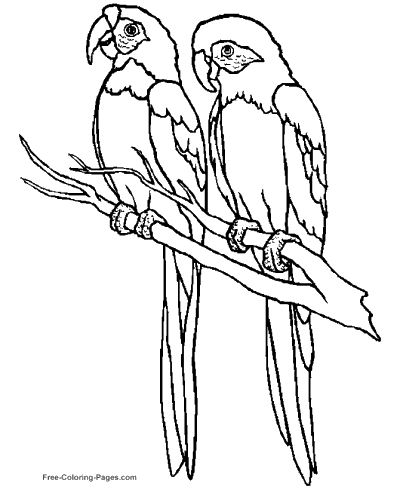 coloring pages for birds