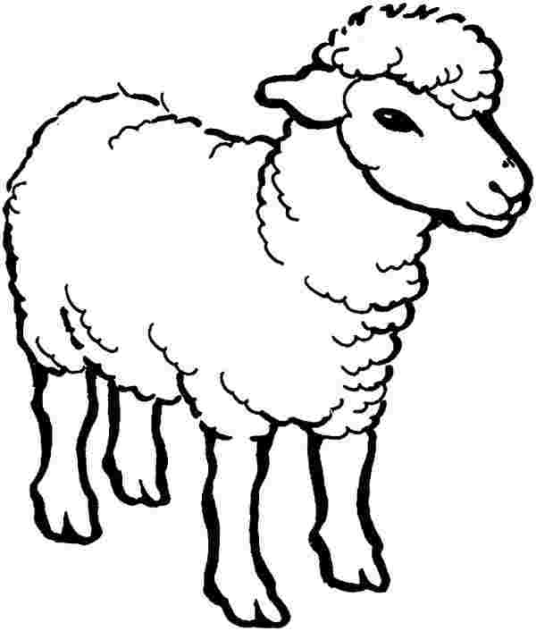 coloring pages for sheep lamb coloring pages
