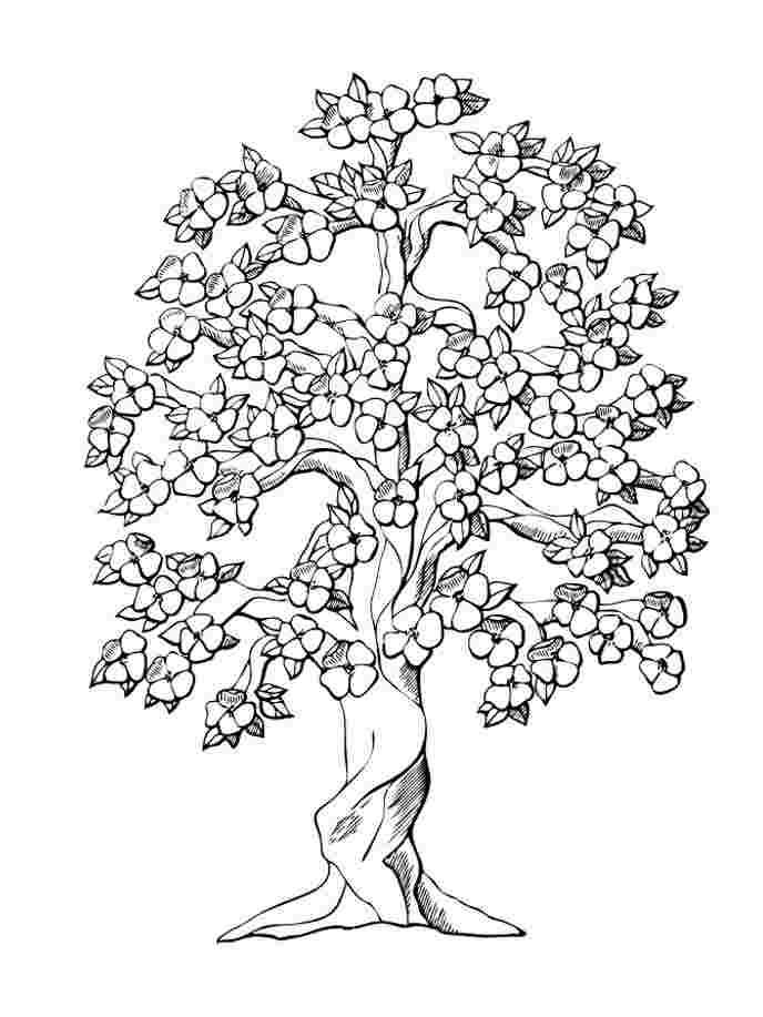coloring pages for trees tree coloring pages free printable