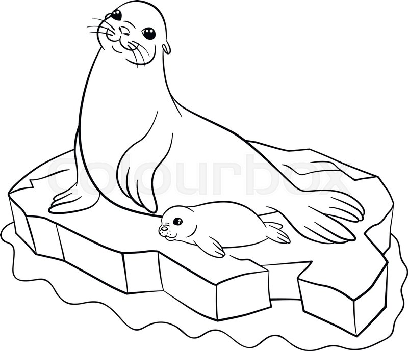 coloring pages mother seal with her stock vector
