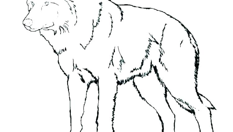 coloring pages of anime wolves