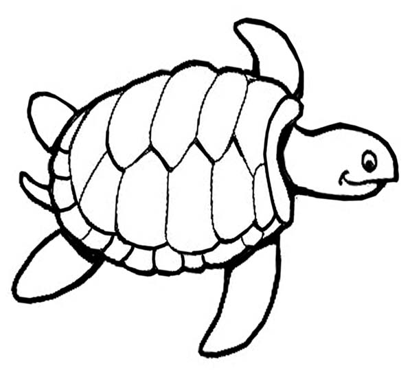 coloring pages of turtle