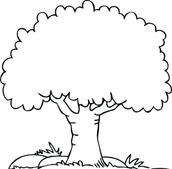 coloring tree noticiasdemexico