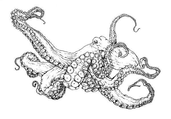 common octopus coloring page