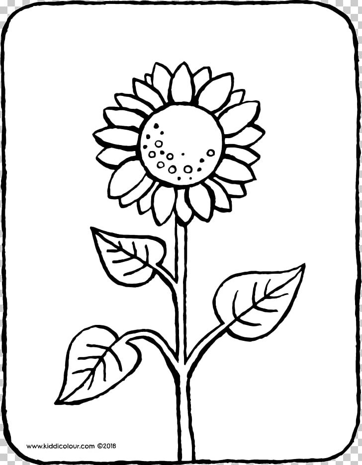 common sunflower coloring book colouring pages ausmalbild