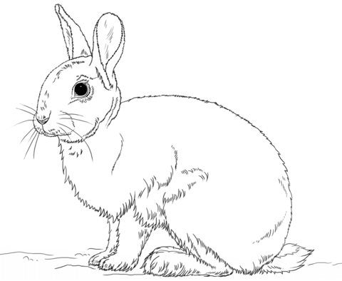 cute bunny rabbit coloring page free printable coloring pages