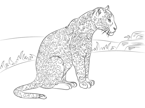cute jaguar coloring page free printable coloring pages