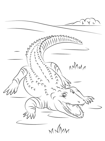 cute nile crocodile coloring page free printable coloring