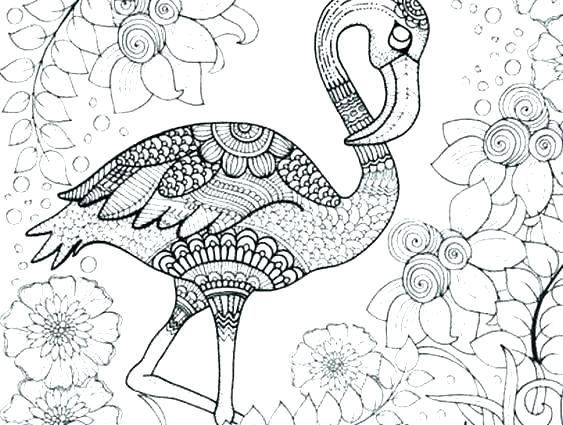 detailed animal coloring pages colouring sheets wigglepro
