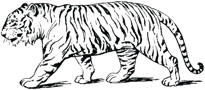 detroit tigers coloring pages free of a tiger peiguclub