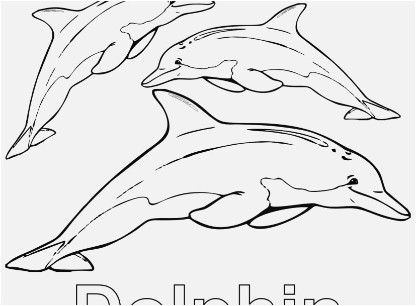 dolphin coloring pages stock dolphin coloring pages