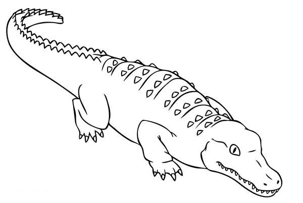 download alligator coloring pages clipart crocodile coloring