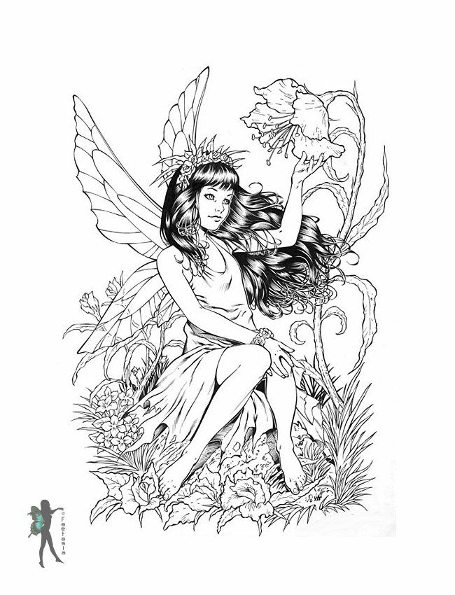 fairy coloring pages for adults enchanted designs fairy
