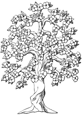 flowering apple tree coloring page free printable coloring